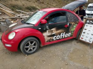 coffee-beetle